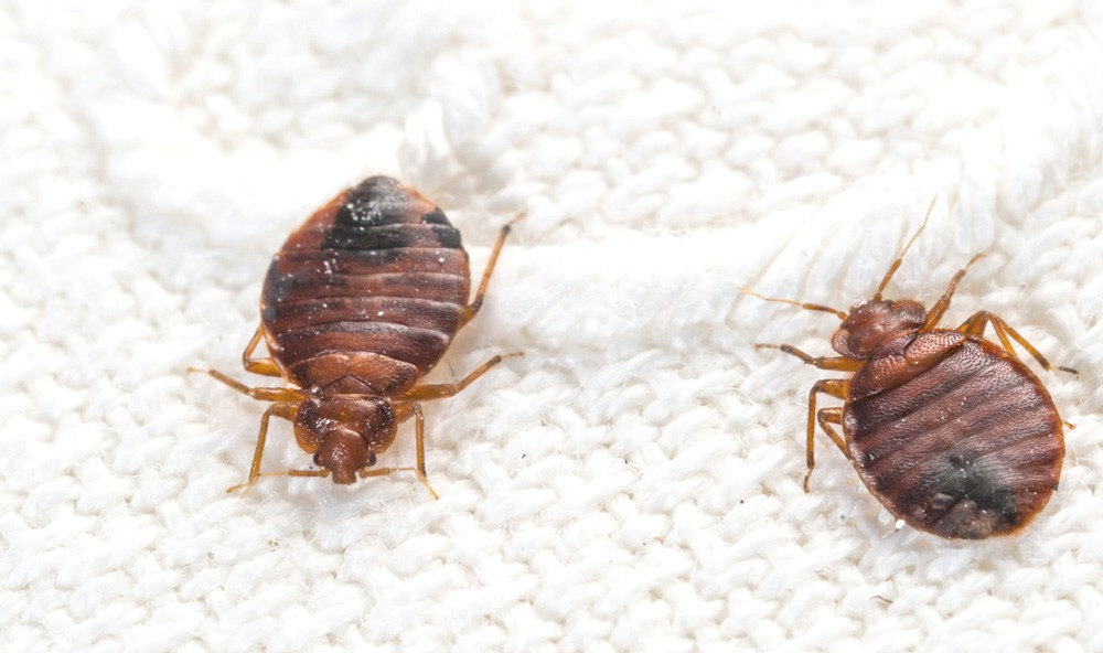 Bed Bug Treatment Vancouver Bc