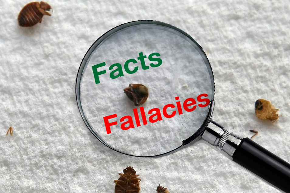bugs how watch of about facts bed to rid thecoolfactshow get